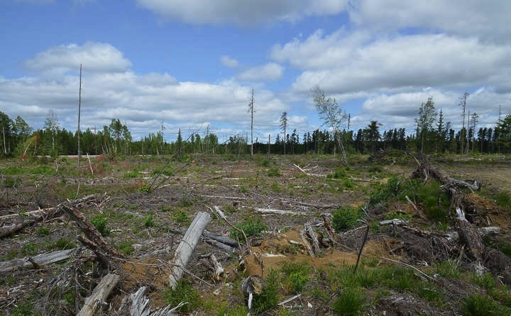 T-McDonald-Canada-Shield-Clearcut-ON_g12i9